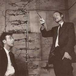 James Watson (left) and Francis Crick (right) next to the first model they made of the structure of DNA in 1953