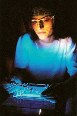 Researcher is working under an ultraviolet light while preparing a gel used in the separation of DNA. The visor is worn to shield the eyes from the UV light.