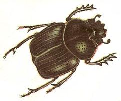 Titan Beetle Flying