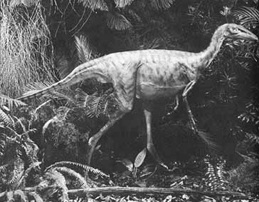 reconstruction of Stenonychosaurus