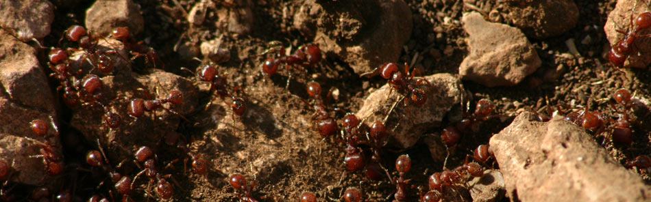 ants in a colony
