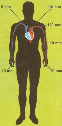 blood pressure in different parts of the body