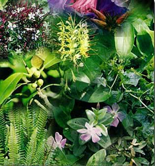 montage of various plants