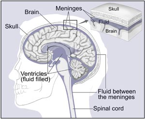 brain and nearby structures