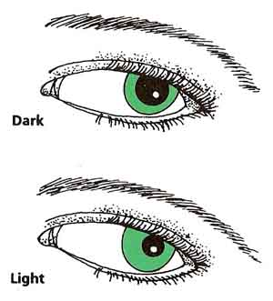 changes in pupil size