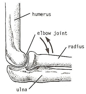Image result for Hinge joint