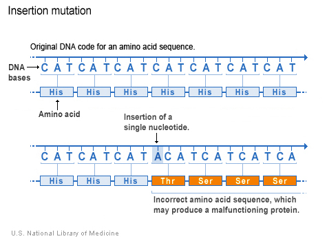 insertion mutation
