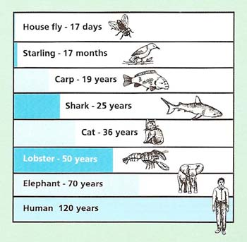 life span of animals