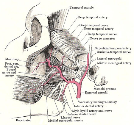 Dissection of the infratemporal fossa