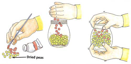 an experiment using peas as molecules