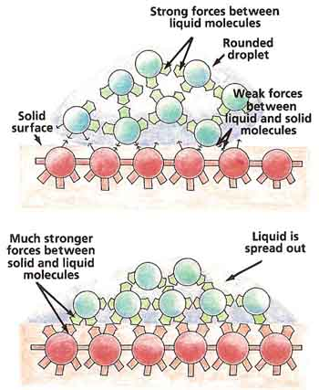The stronger the force between a liquid and a solid surface, the more the liquid spreads out