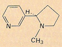 structure of the nicotine molecule
