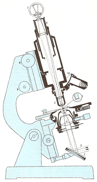 section through an optical microscope