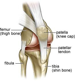 knee patella