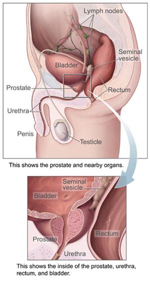 masturbation-prostata-gesundheit-manderlay-topless-video