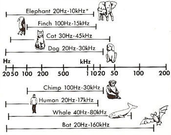 frequency ranges of animal sounds