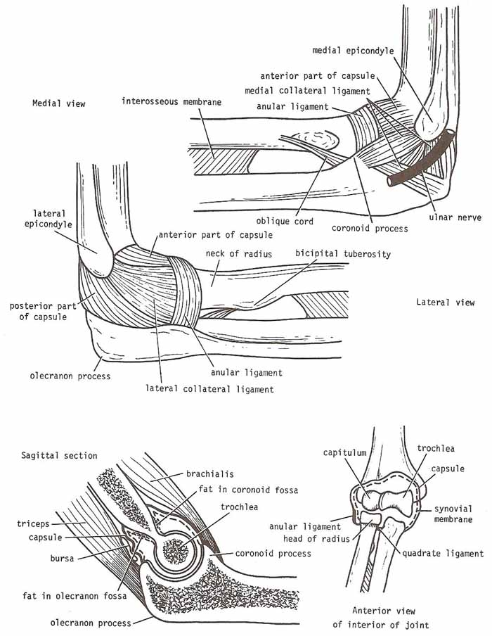 right elbow joint