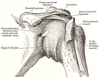 front of left shoulder joint