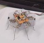 slime-mold controlled robot