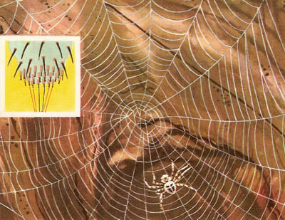 The web of a garden spider and enlarged view of a spinneret