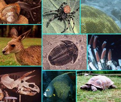 Various organisms, extant and extinct