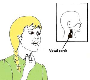 the throat and vocal cords