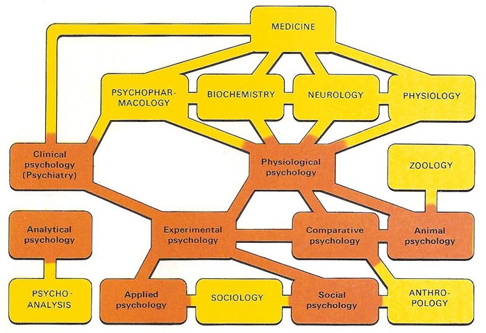 The different branches of psychology (red) and their links with allied sciences (yellow)