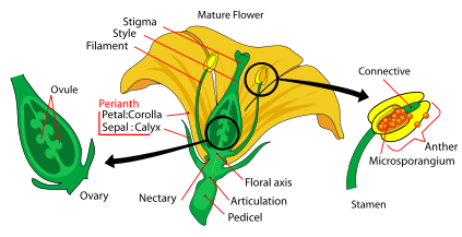parts of mature flower