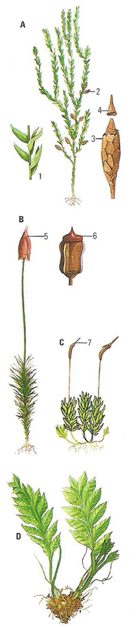 Examples of different types of moss