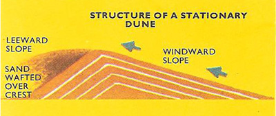 structure of a stationary dune