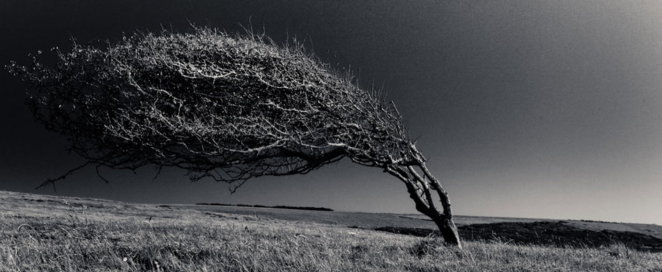 tree bent by the wind