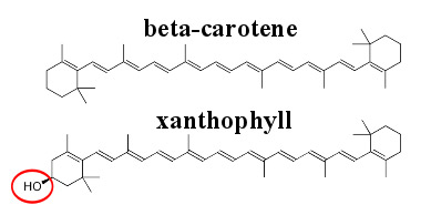xanthophyll and beta-carotene