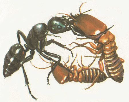 An ant and termites fighting