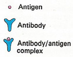antigen illustration key