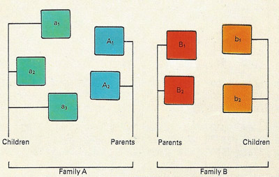 In this diagram of the families in the top picture, letters have been give to each of the elements in the set. The letters are then sufficient for the mathematical manipulation of of the set in what are called Venn diagrams, first introduced by the mathematician John Venn in 1880. In such diagrams, areas represent sets of things.