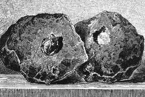 lithograph of a toad found in a hollow inside a stone