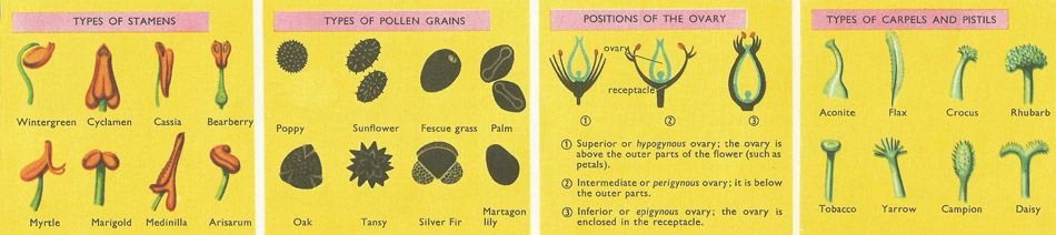 types of stamens, carpels, and pollen grains